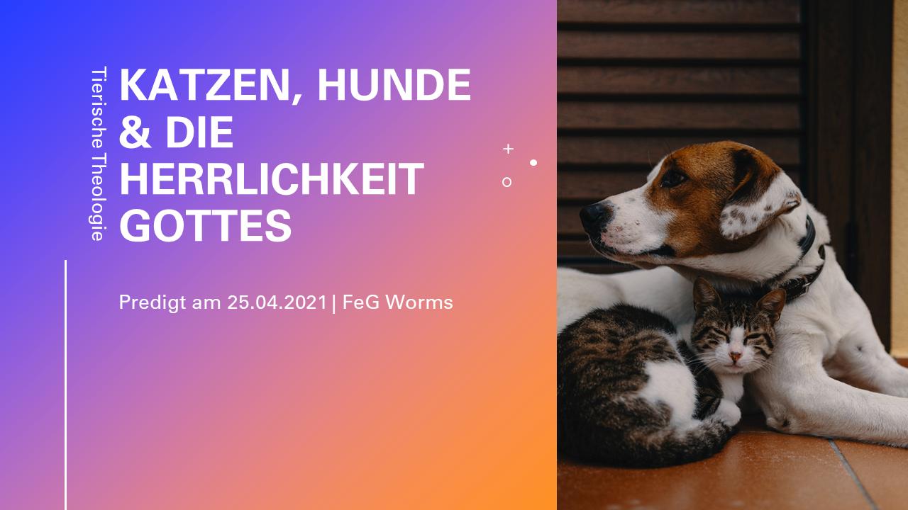 Hunde, Katzen & die Herrlichkeit Gottes | Teil 1